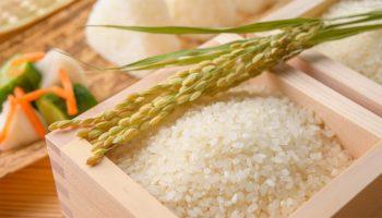 Gạo Nhật là gì? Hình dáng của hạt gạo Nhật
